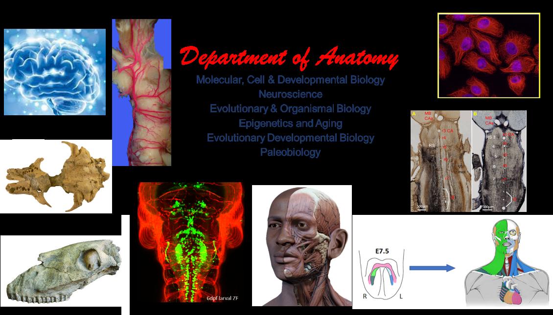 Anatomy Information